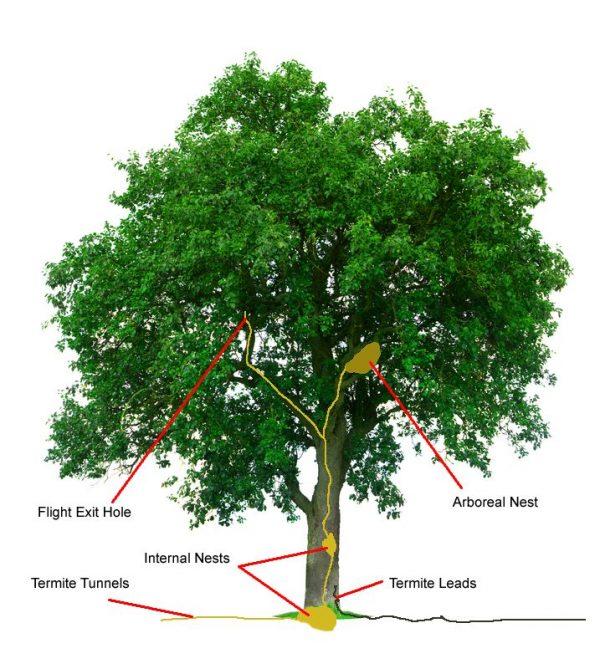 Tree with Termites