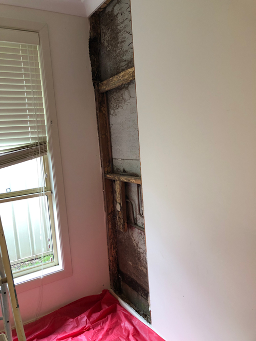 Termite treatment dead nest in wall cavity