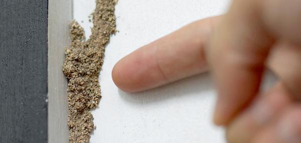 Termite Inspection Newcastle